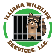 Wildlife removal Beverly Shores